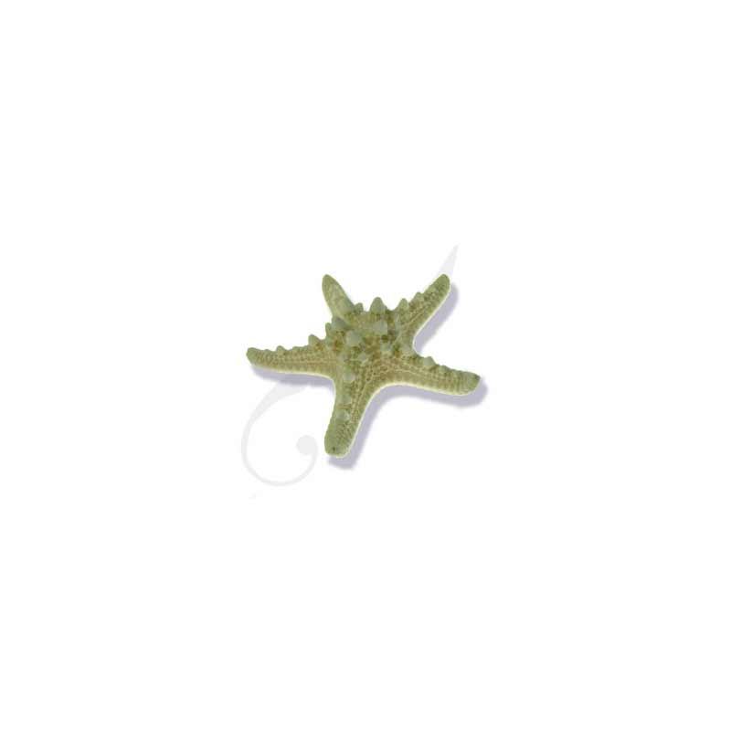 Knobby Star fish